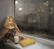 A cat on a windowsill. Stock Images