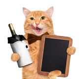 Cat with wine. Stock Photo