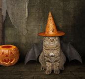 Cat with wings in a witch hat royalty free stock photos