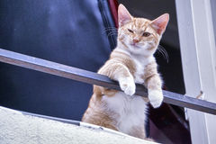 Cat winking Royalty Free Stock Image