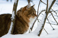 Cat in the winter Stock Photography