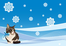 cat on the winter background Stock Images