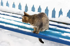 The cat in the winter on the bench. Royalty Free Stock Photography