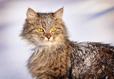 Cat in winter Stock Photos