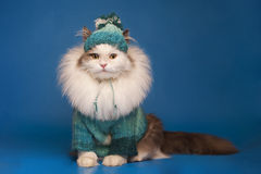 Cat in winter clothes Stock Photography