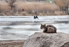 Cat on winter fishing Stock Photo