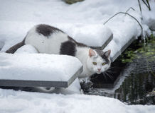 Cat in winter garden Royalty Free Stock Image
