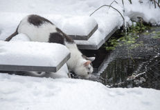 Cat in winter garden with snow Stock Image