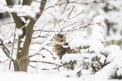 Cat in winter. Cat hiding behind the tree Stock Photography