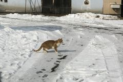 Cat in the winter time edu for catch stock image