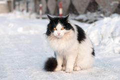 Cat on a winter walk Stock Photos
