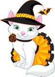 Cat Witch. A cat in a witch costume Royalty Free Stock Image