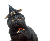 Cat in a witch hat Stock Photo
