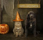 Cat with a dog celebrate Halloween. The cat in a witch hat with a dog are in the barn. Happy Halloween stock photography