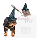 Cat  with witches broom stick and Dog with hats for halloween peeking from behind empty board. isolated on white Royalty Free Stock Photo