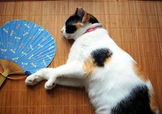 Cat with fan. Cat sleeping on a mat with a fan royalty free stock photo