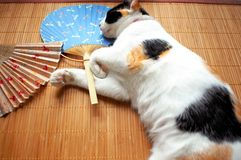 Cat with fan. Cat sleeping on a mat with two fans royalty free stock images