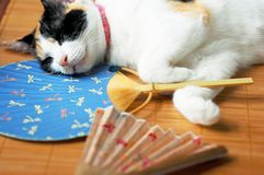 Cat with fan. Cat sleeping on a mat with two fans stock photos