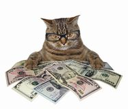 Free Cat With American Dollars Stock Image - 123325991