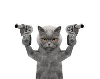 Free Cat With Guns Is Murderer Royalty Free Stock Image - 79334316