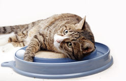 Free Cat With Toy Stock Images - 19617814