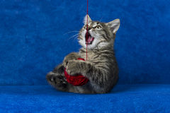 Cat With Woolen Ball Stock Images
