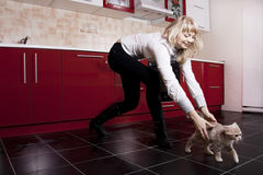 Cat and the woman on kitchen Stock Image
