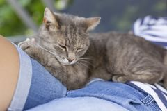 Cat in woman`s lap Royalty Free Stock Images