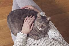 Cat in a woman`s lap Stock Photo