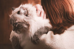 Cat on the woman shoulder. Siberian cat on the woman shoulder Royalty Free Stock Image