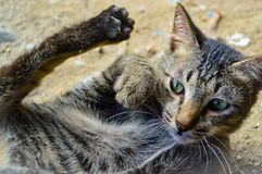 A cat wont more cuddle. An abandoned and very trustful domestic cat wants to be stroked Royalty Free Stock Photo