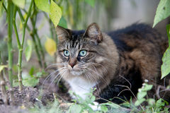 Cat in the wood Stock Images