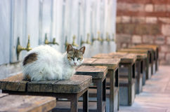 Cat on wood chair Royalty Free Stock Photography