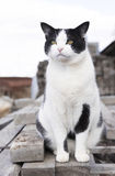 Cat of Wood Pile Stock Images