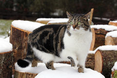 The cat on the wood Royalty Free Stock Photo
