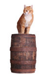 Cat on wooden barrel Royalty Free Stock Photo