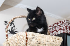 Cat in a wooden basket Royalty Free Stock Photography