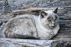 Cat on a wooden bench Royalty Free Stock Images