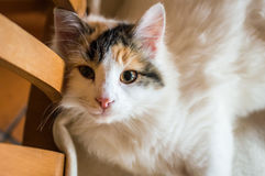 A cat on a wooden chair Royalty Free Stock Photography