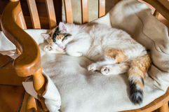 A cat on a wooden chair Royalty Free Stock Photo