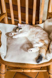 A cat on a wooden chair Stock Images