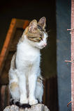 Cat on wooden fence Royalty Free Stock Images