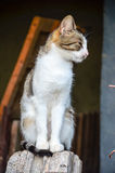 Cat on wooden fence Royalty Free Stock Photos