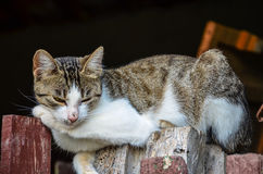 Cat on wooden fence Royalty Free Stock Photography