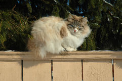 Cat on a wooden fence Royalty Free Stock Images