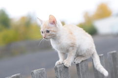 Cat on a wooden fence Stock Photo