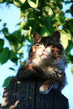 Cat. On wooden fence looking at sunset royalty free stock photos