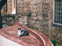 Cat on a wooden fishing boat, upside down, in Perast, Montenegro.  Royalty Free Stock Images