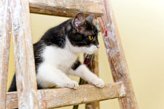 Cat on a wooden ladder Royalty Free Stock Image