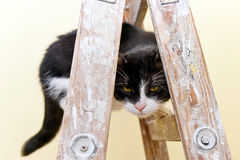 Cat on a wooden ladder Royalty Free Stock Photos
